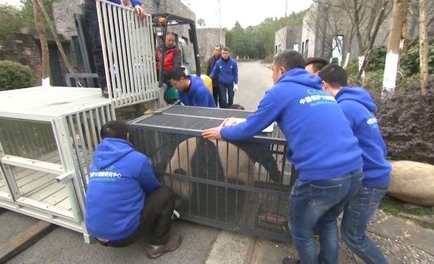 Pandojen matka alkoi Kiinan Dujiangyunissa sijaitsevasta hoitokeskuksesta.