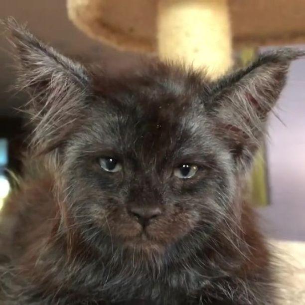 Kissassa on jotain ihmismäistä.