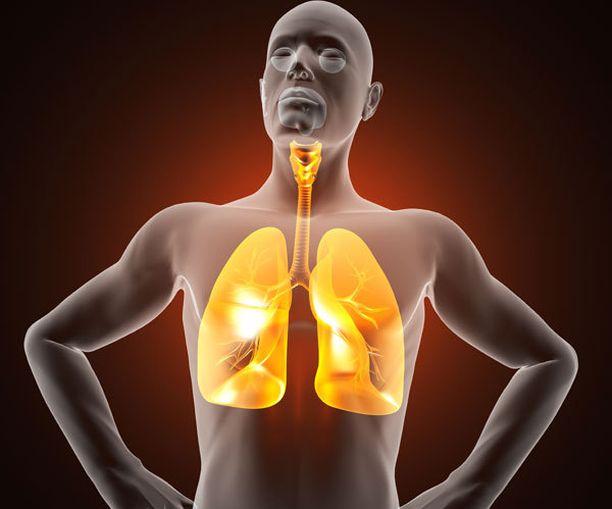 Keuhkot koostuvat miljoonista pienistä rakkuloista.
