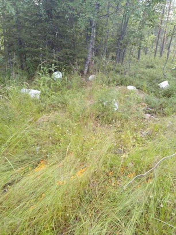 Hilloja oli nakattu myös metsätietä vierustavaan ojaan. Valkoiset marjasangot oli heitetty tienvarteen.