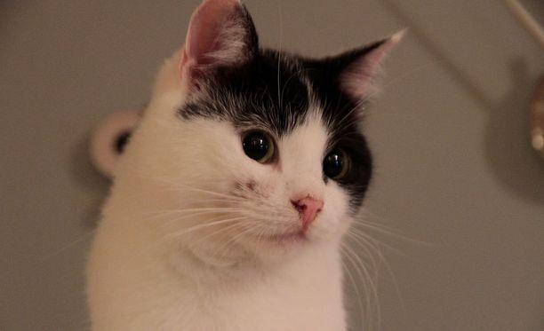 Kissoja on tapettu eri puolilla Englantia.(Kuvituskuva)