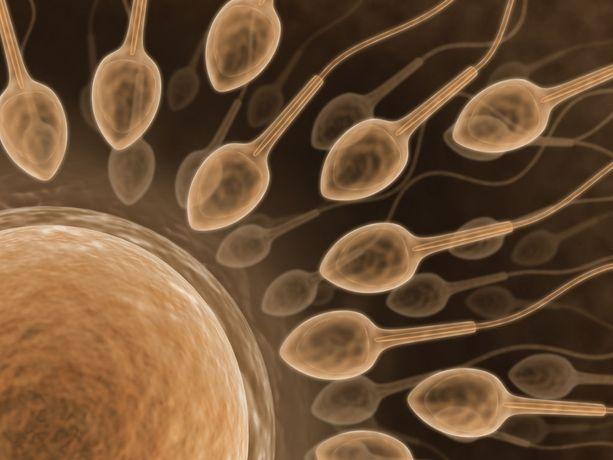Tupakoivien äitien pojilla on tutkimuksissa todettu 20-40 prosenttia vähemmän siittiöitä verrattuna savuttomien äitien poikiin.