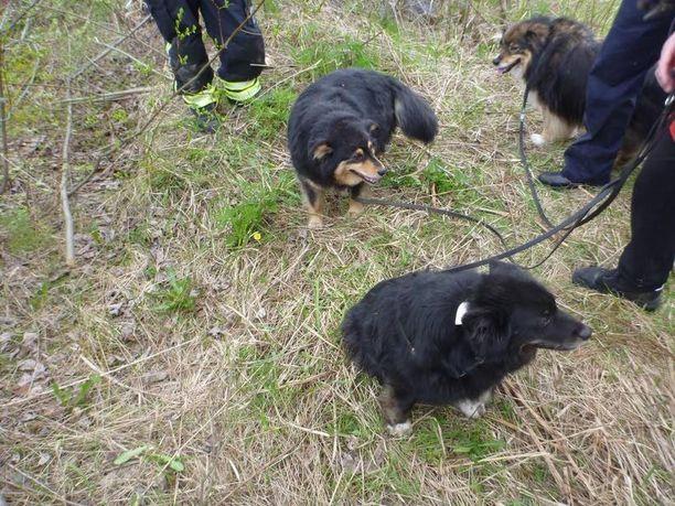 Taika ja Tessa olivat nuuhkivat pelastajiaan tyytyväisesti.