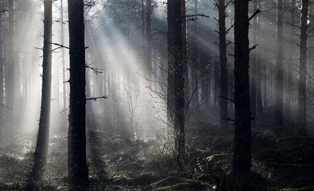 Suomen metsät täyttyvät kuusista, koivuista ja tammista, kertoo Telegraph.