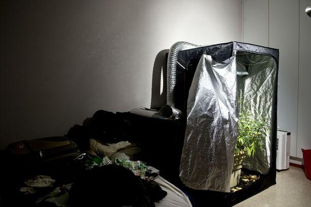 Kankaanpääläisestä kerrostaloyksiöstä löytyi viime vuonna teltta, jossa oli pari kannabiskasvia kasvamassa.
