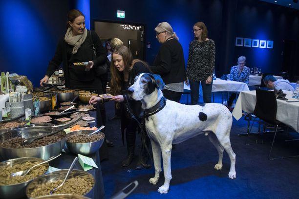 Tanskandoggi Dali ja omistaja Heidi Mulari tutustuvat buffet-tarjontaan.