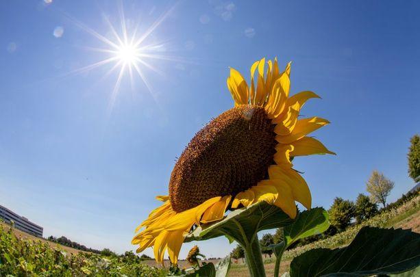 Tutkijoiden mukaan paremmilla lyhyen aikavälin ennusteilla ja paikallisiin lämpöaaltoihin varautumalla voitaisiin säästää satoa ja ihmishenkiä.