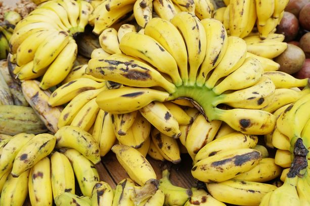 Sieni voi uhata muitakin banaanilajikkeita.