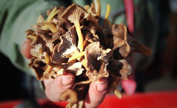 Radioaktivisuutta voi vähentää keittämällä ja liottamalla sieniä.