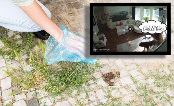 Taustalla olevan kuvan tapauksessa koira on ulostanut kivetykselle. Pikkukuvassa vahinko on pudonnut valitettavasti olohuoneen matolle.