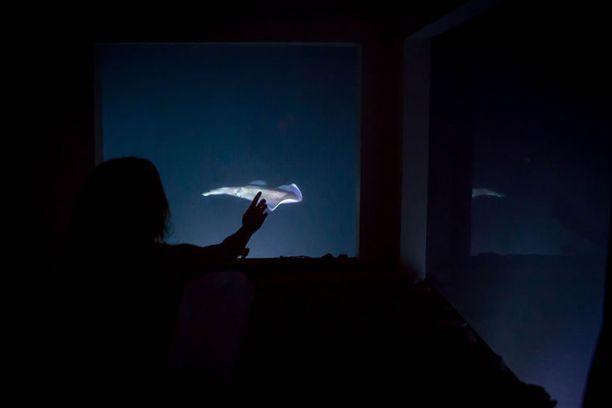 Yöllistä meren elämää voi seurata kohdevalaisimien ansiosta.