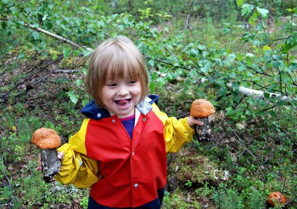 Jos joka syksy opettelee tunnistamaan vaikkapa kolme uutta sientä, muutamassa vuodessa hallussa on melkoinen tietomäärä.