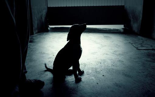 Syyte: Mies ja nainen kohtelivat huonosti kymmeniä koiria ja muita eläimiä – puutteita hygieniassa, tiloissa ja ruokinnassa