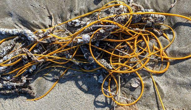 Meripiiskaa luullaan usein roskaksi.