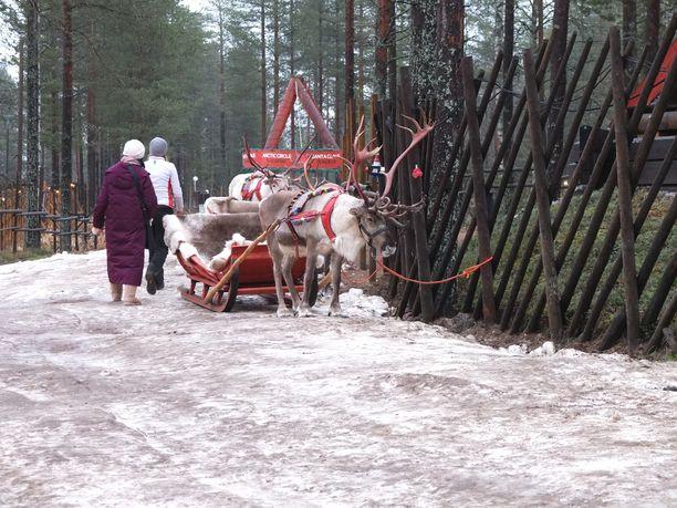 Joulupukin Pajakylän ainoa lumi on Ari Körkön 400 metrin poroajelureitillä.