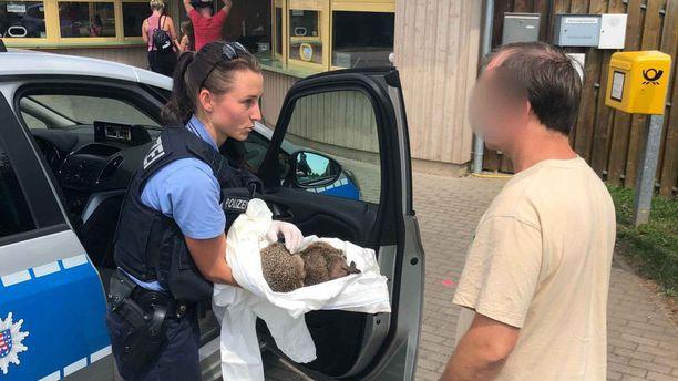 Poliisi vei krapulaiset siilit hoidettavaksi eläintarhaan.