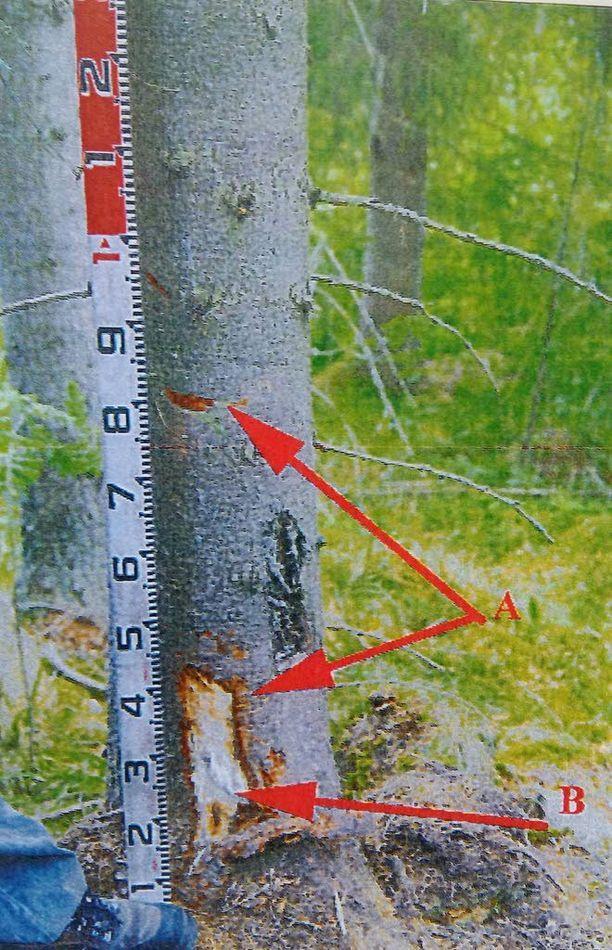Tähän puuhun mönkijä törmäsi suistuessaan tieltä.