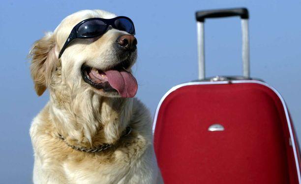 Lemmikin matkustellessa on huolehdittava siitä, ettei mukana kulkeudu vaarallisia pöpöjä.