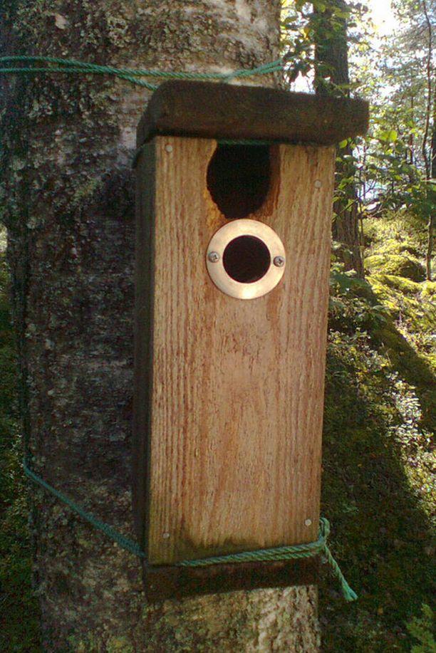 Lintu on laajentanut pönttönsä sisäänkäyntiä
