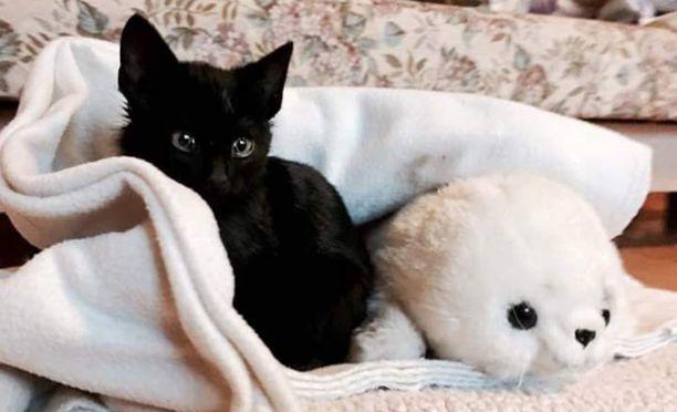 Mini on saanut uuden rakastavan kodin, jossa sen toivotaan toipuvan koettelemuksistaan.