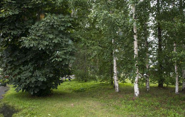 Puisto, josta surmattu tyttö löydettiin, sijaitsee Juvankadun varrella.