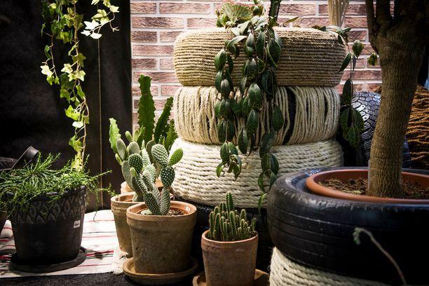 Erilaiset rönsyilevät viherkasvit kuuluvat bohosisustukseen. Vanha kunnon kaktuskin tuo valtavasti eloa kotiin.