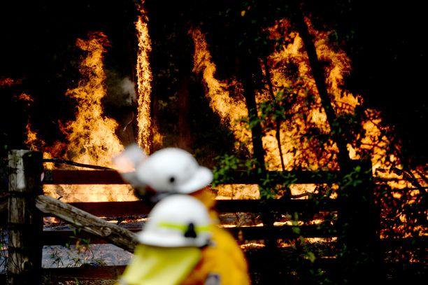 Tulipalot riehuvat Australian itärannikolla.