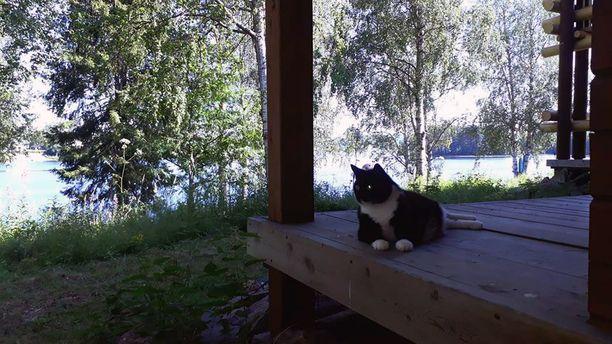 Kuvassa Hilma-kissa lomailee mökillä Kemijoen rannalla Rovaniemellä.
