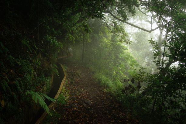 Madeiran levadat eli vaellusreitit kulkevat uskomattomissa maisemissa.