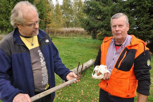 Ex-murhatutkija Terho Mäki (vas.) ja metsästäjä Tuure Mäntymaa pohtivat, kumpi olisi voinut aiheuttaa Pyryn kehon vammat - perunakuokka vai suden hampaat (vanhassa kallossa).