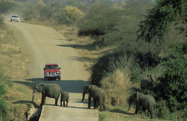 Krugerin kansallispuistossa ajaminen on kuin olisi keskellä luontodokumenttiä.