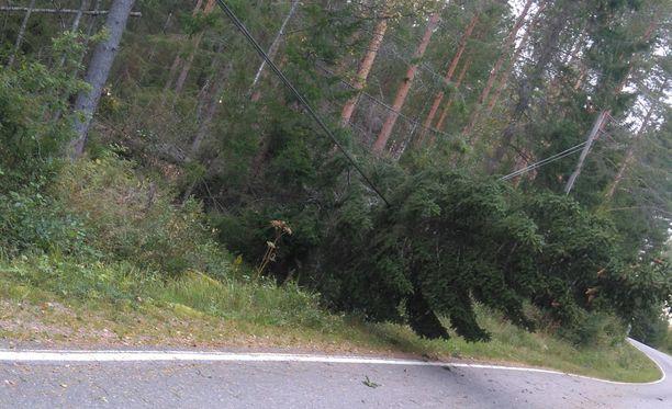 Ikaalisissa Rauli-myrsky kaatoi puita sähkölinjoille.