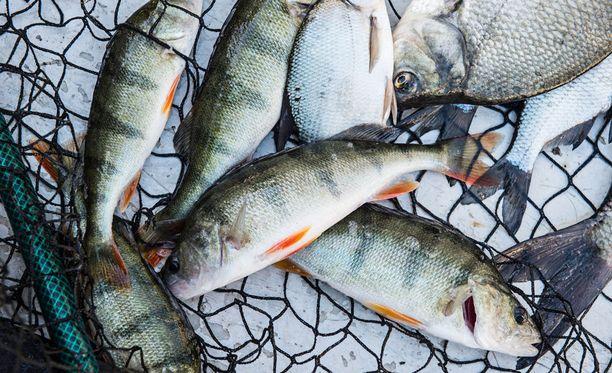 Kalasaaliit ovat jääneet tänä kesänä laihoiksi.