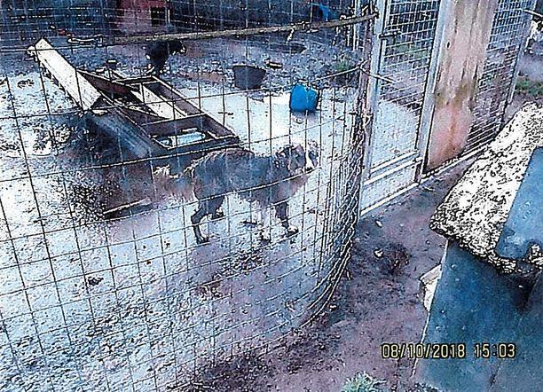Laiha ja likainen koira värjötteli kylmissään tarhassa. Kun turkki on likainen, se ei enää ole yhtä hyvä suoja kylmää vastaan.