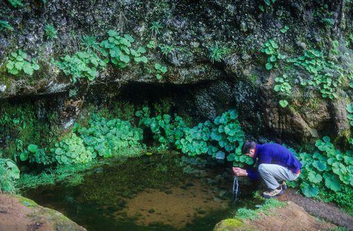 El Hierron saarelta löytyy hienoja luontokohteita.