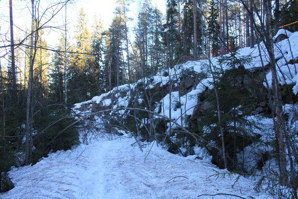 Himoksen virallisten rinteiden ulkopuolella metsässä on vaaranpaikkoja. Kuva ei ole onnettomuuspaikalta.