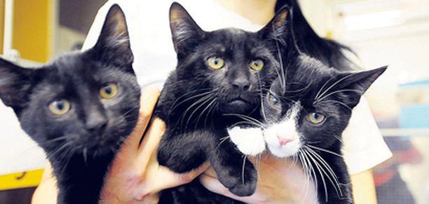 Tutkimuksen perusteella näyttää siltä, että kissat käyttävät erikoiskehräystä silloin, kun ne haluavat kiinnittää ihmisen huomion, mutta eivät halua ärsyttää tätä liikaa äänekkäällä naukumisella.