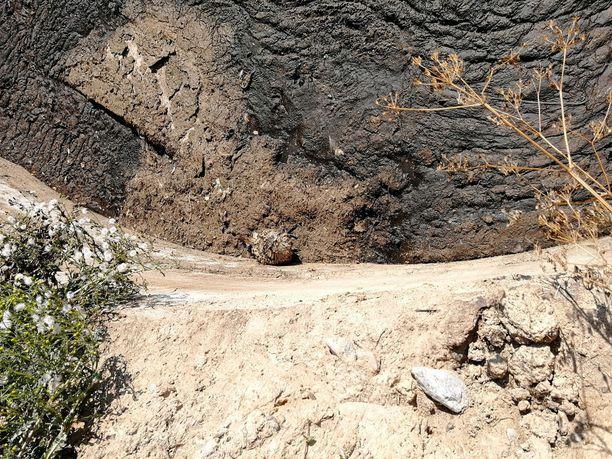 Huuhkaja oli pudonnut kolme metriä syvään lietesäiliöön.
