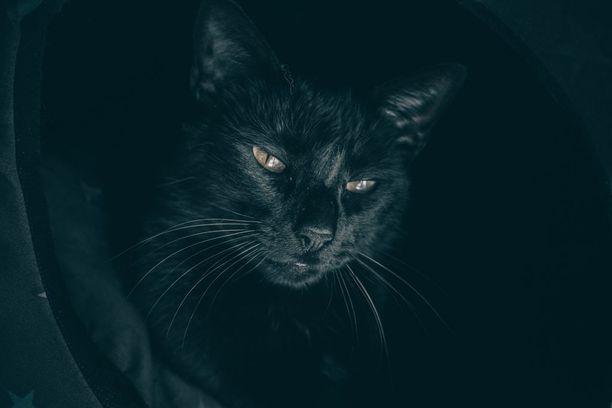 Briteissä vietetään kansallista mustien kissojen päivää 27. lokakuuta.