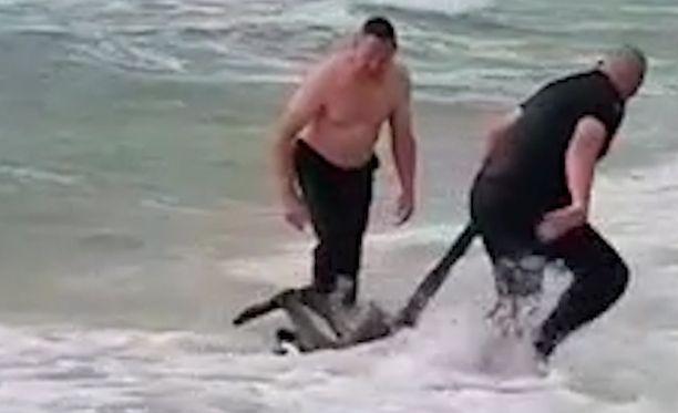 Konstaapelit Russo ja Tonkin saivat vedettyä kengurun rannalle.