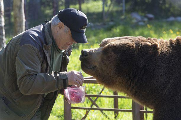 Sulo Karjalainen ruokkii Juuso-karhua.