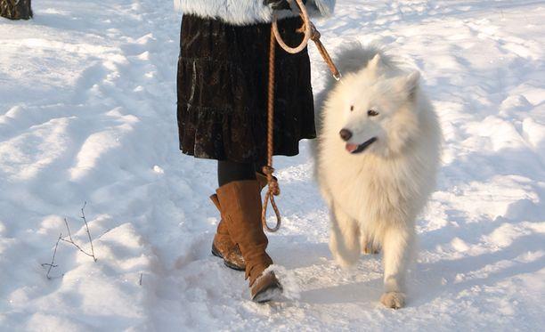 Koirat kannattaa pitää kytkettynä uutenavuotena.