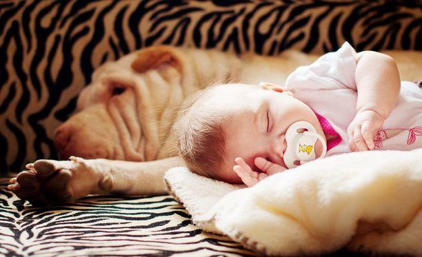 Koirakaveri saattaa edistää vauvan terveyttä yllättävällä tavalla.