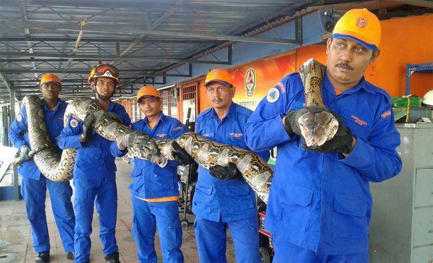 Siviilipuolustusviranomaiset esittelevät käärmettä pyydystämisen jälkeen.