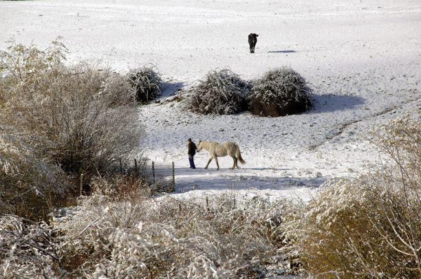 Espanjassa on ollut poikkeuksellisen lämmin syksy. Nyt sinnekin on saatu lunta. Tämän verran sitä löytyi maanantaina Segovian seudulta.