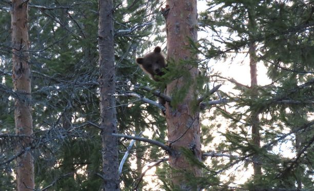 Karhut olivat hievahtamatta kuvaajan mukaan jopa kymmenen minuuttia.