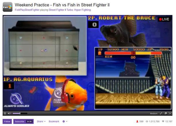 Kalapeliä voi seurata suorana lähetyksenä Twitch-verkkopalvelusta.