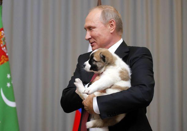 Vladimir Putin sai koiranpennun syntymäpäivälahjaksi viime vuonna Turkmenistanin presidentiltä Gurbanguly Berdimuhamedowilta.