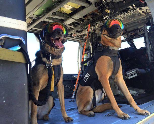 Ricky ja Evy harjoittelivat toimintaa helikoptereista.