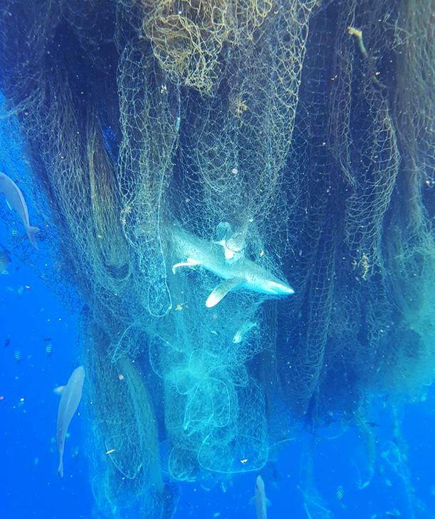 Verkko ulottui kymmenien metrien syvyyteen.